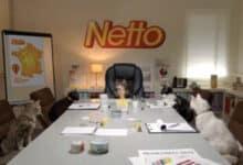 Photo of Netto ou l'utilisation des chats pour faire buzzer