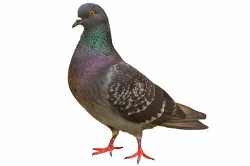 Taxe : les patrons pigeons…