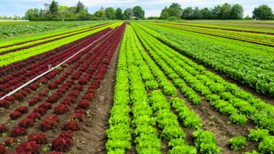 Photo of 2018, année record pour l'agriculture bio