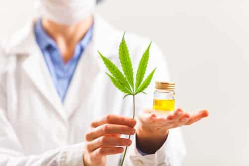 Le marché du cannabis « légal »
