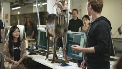 Photo of Avez-vous déjà vu Mark Zuckerberg discuter avec une chèvre?
