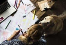 Photo of Et si on faisait venir les animaux au travail ?