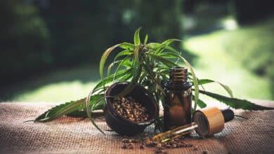 Photo de Quels sont les bienfaits de l'huile de cannabis ?
