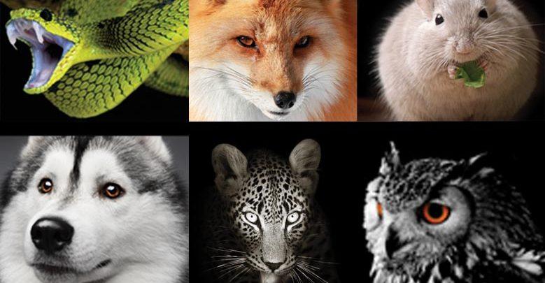 Quel animal-entrepreneur êtes-vous ?
